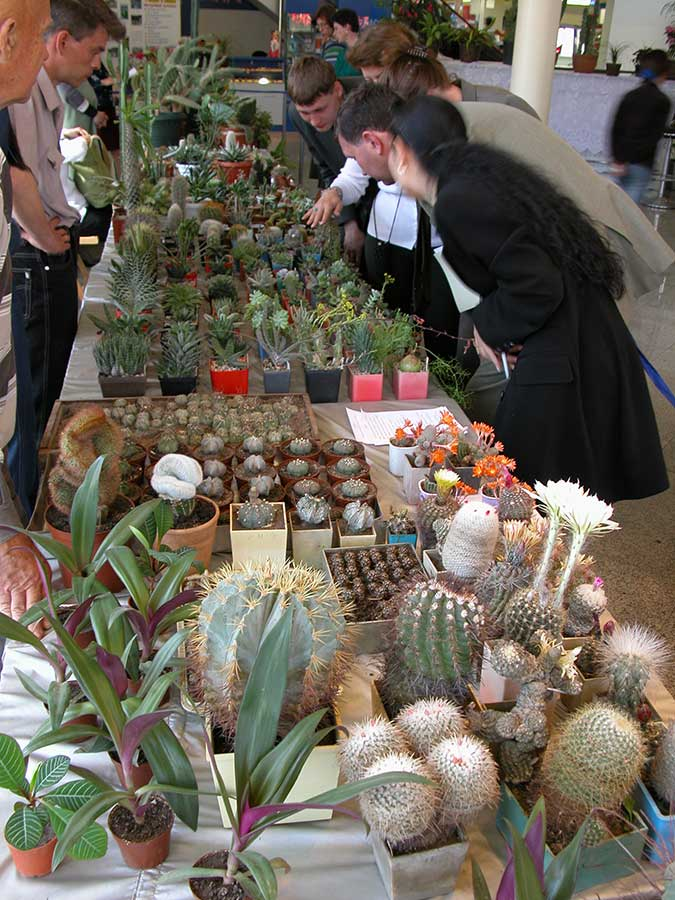 Выставка кактусов Сити Центр
